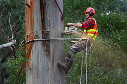 Target Tree Service and Removal
