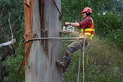 Tree Surgeons Stratford Upon Avon