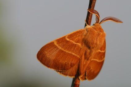 Moth Control Perth