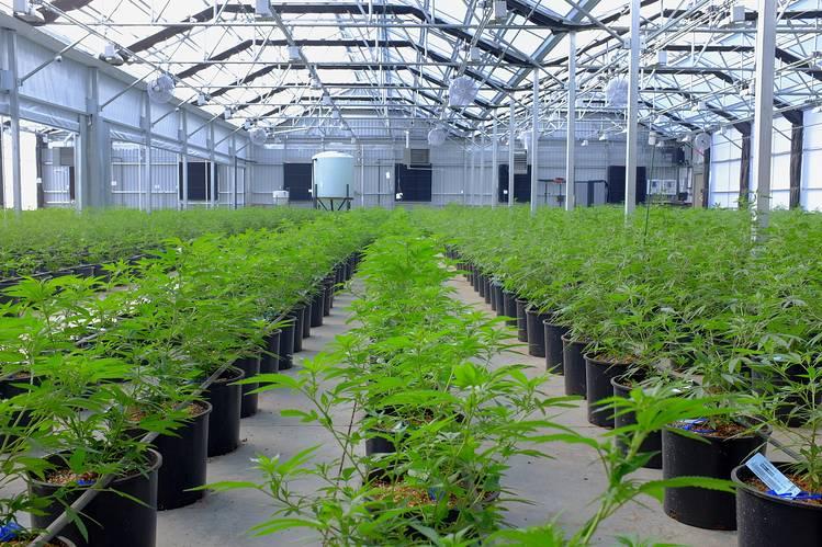 hightimescannabis