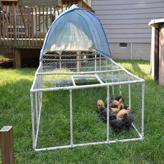 Mr Chicken Coop