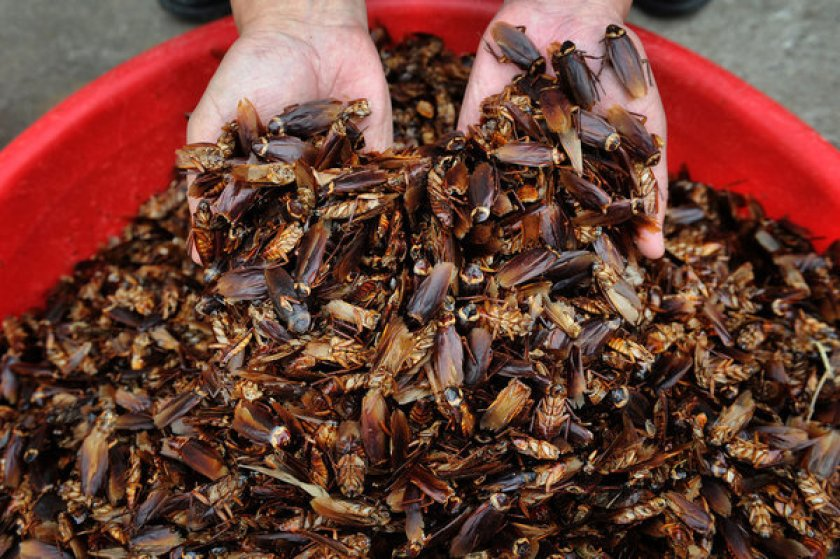 Cockroach Removal Brisbane