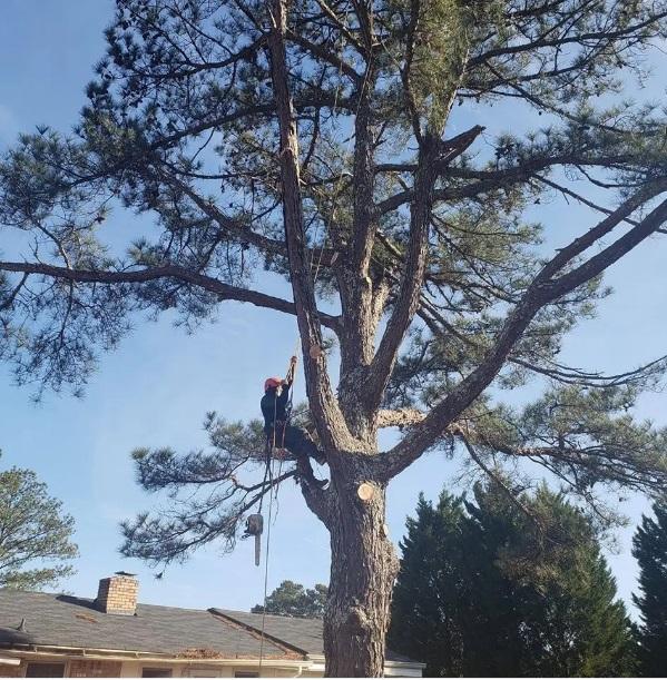 Vilchis Tree Service