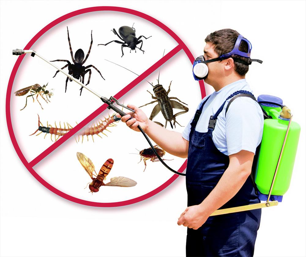 Pest Control Newborough