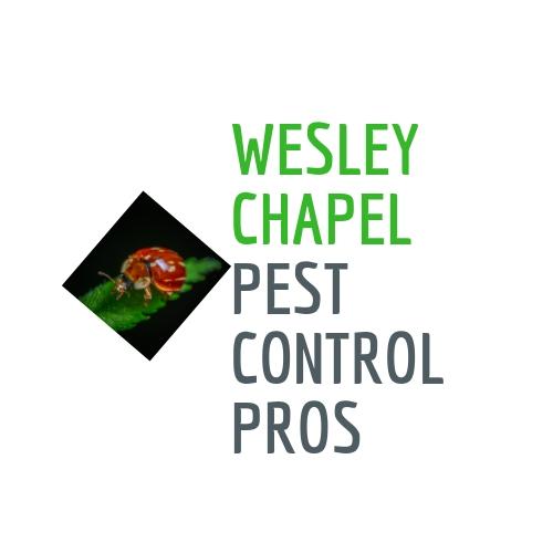 Wesley Chapel Pest Control Pros