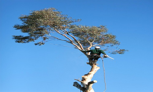 San Angelo Tree Removal