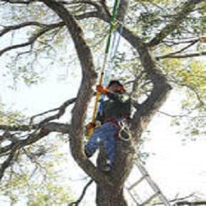 Santa Ana Tree Service Experts
