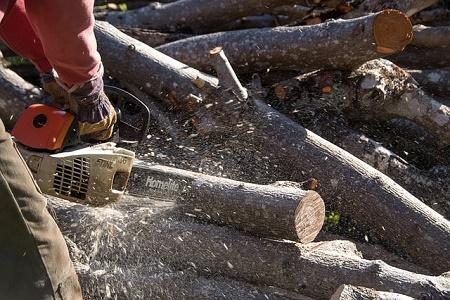Tree Service Norfolk