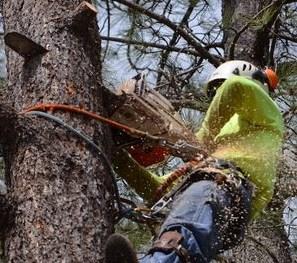 Joliet Tree Service Pros