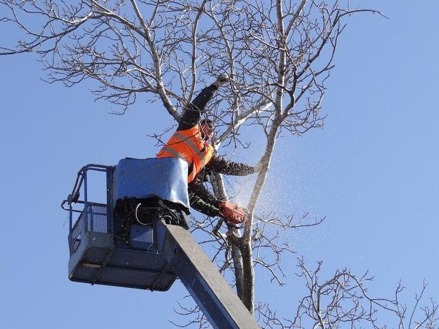 Wheaton Tree Service