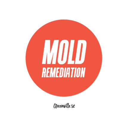 Mold Inspection and Removal by Greenville Mold Pros