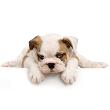 Sammy's Doggie Daycare & Boarding