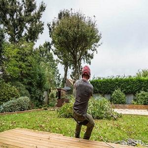Long Beach Tree Experts
