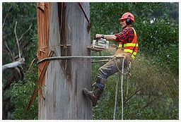 The Syracuse Tree Service Pros